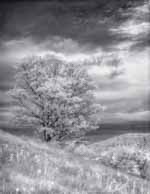 Infrared Maple, Sharon Vermont