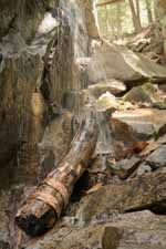 Birch Log by Waterfall Cliff II